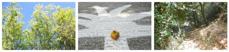 Ahmad, Pomegranate