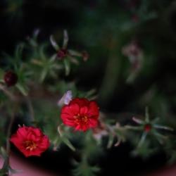 Mohammad, Flowers, esito del workshop, Samos, 2017